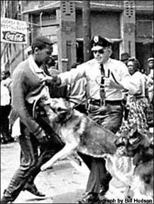 Civil Rights photo by Bill Hudson showing peace officers with german shep. dogs and one dog bighting an African American
