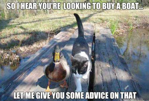 Cat and Duck walking together ~ Duck says, So I hear you're looking to buy a boat... Let me give you some advice on that