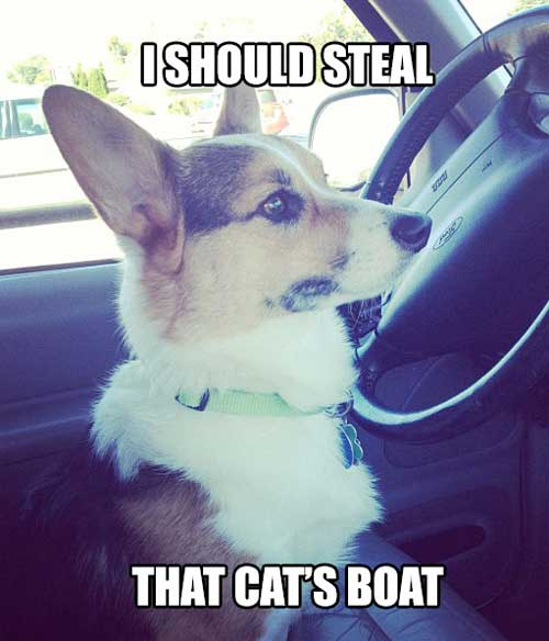 I should steal that cat's boat