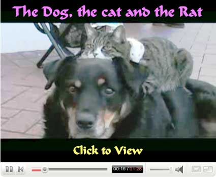 The Dog, the Cat and the Rat on YouTube