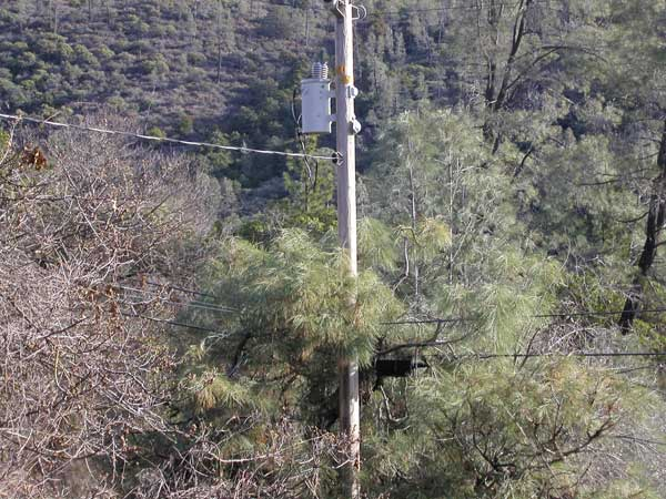 Dangerous Transformer Above Pine tree with dry Pine needles below it PG&E refuses to look at - for almost 8 years